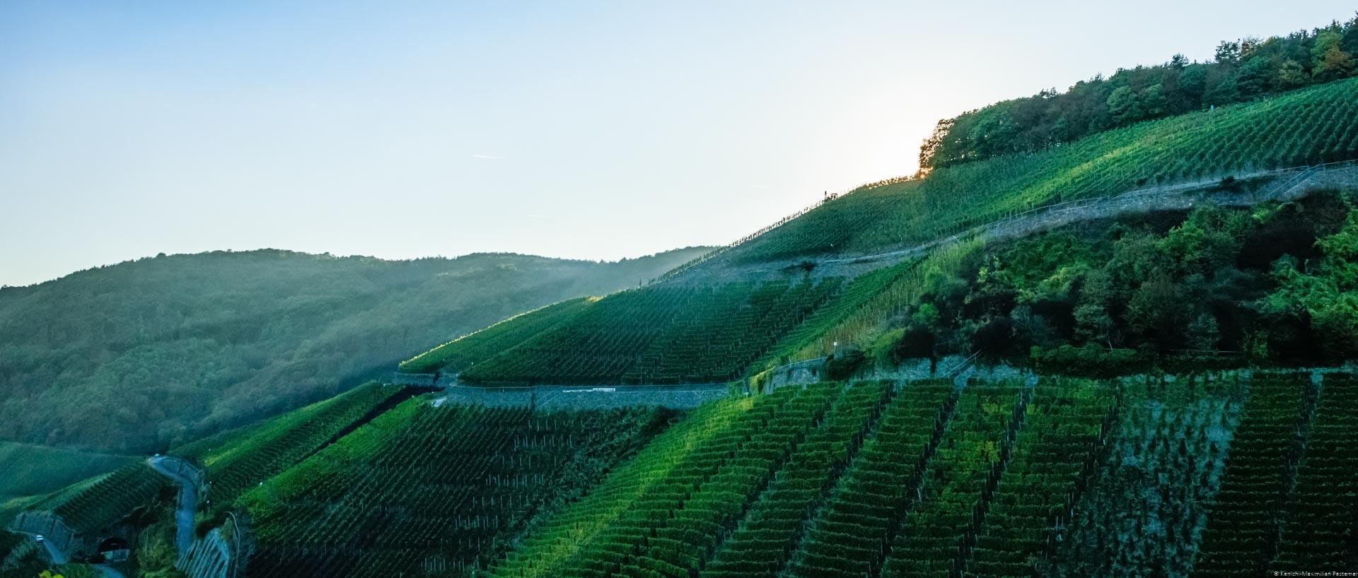 Im Ahrtal geht die Sonne hinter dem steilen Weinberg Dernauer Schieferlay unter