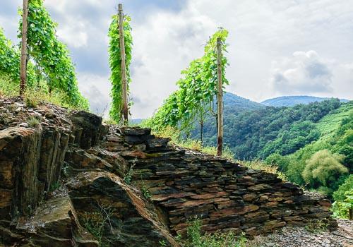 Terrasse eines Weinbergs wird durch Mauer aus Schiefer gestützt