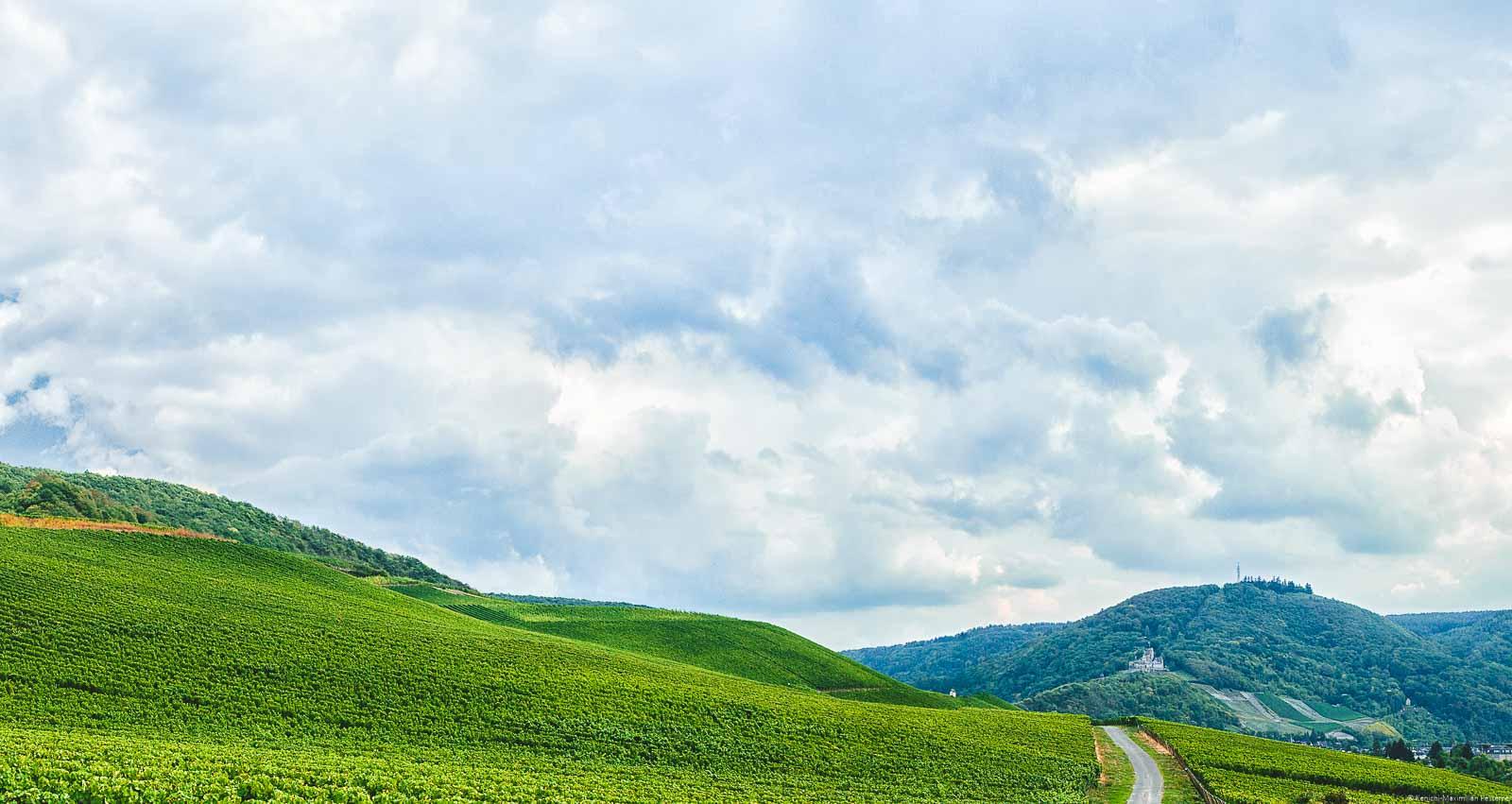 Weite ausschweifende Weinberge, Burg, Wälder und Wolken am Himmel
