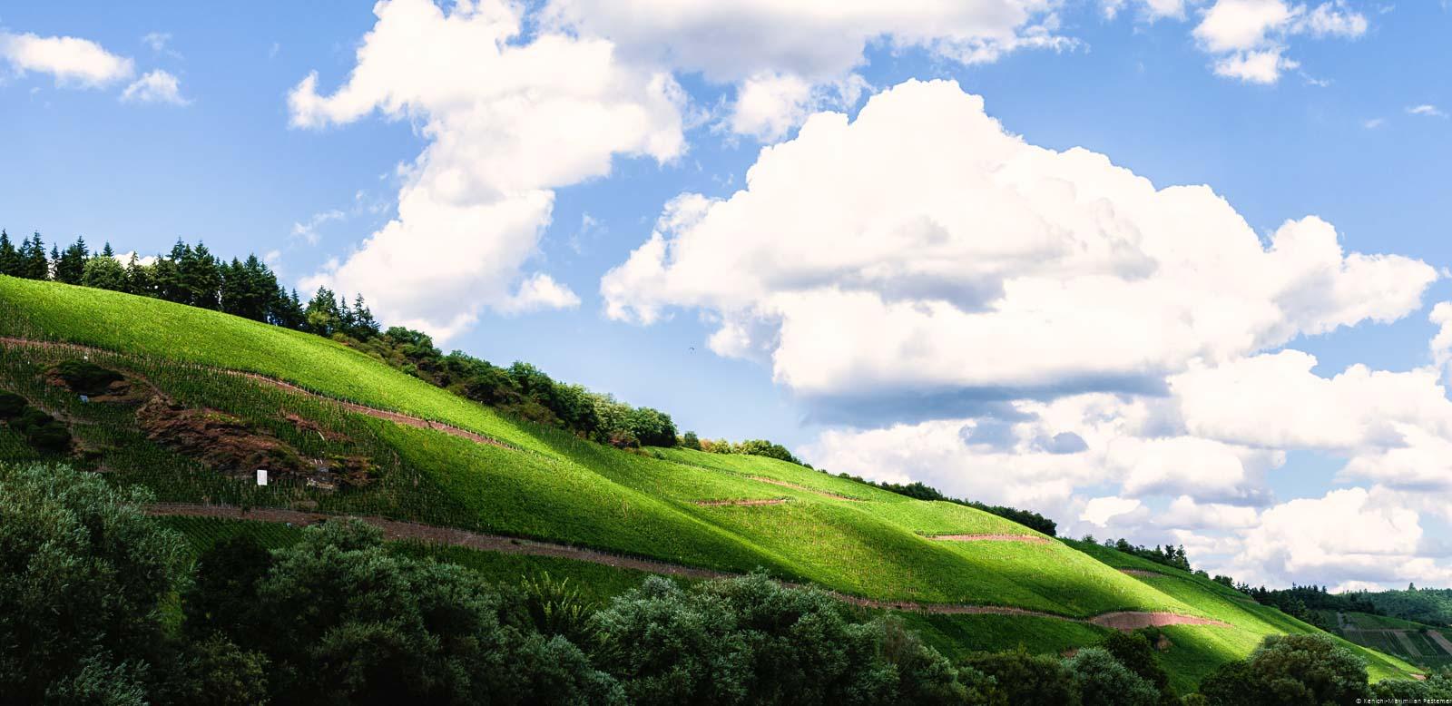 Unten befinden sich Bäume. Dahinter schlängelt sich der Weinberg Brauneberger Juffer Sonnenuhr in der Mitte des Bildes. Der blaue Himmel ist bewölkt.