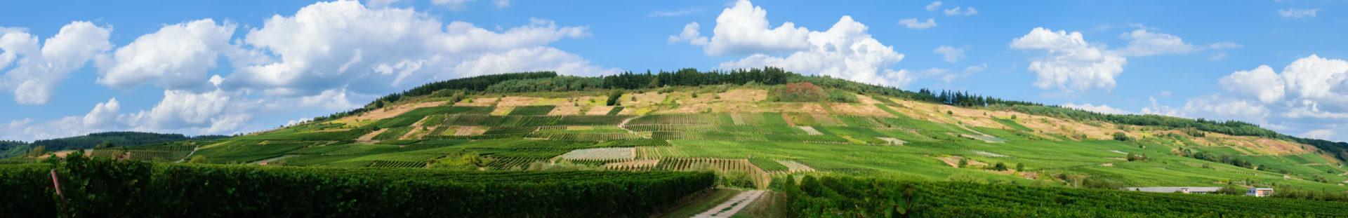 Vorne ist der flache Bereich des Weinberges Mehringer Goldkupp. Dahinter erkennt man den steilen Weinberg. Der Himmel über dem Weinberg ist blau und bewölkt.