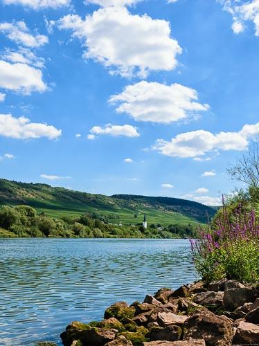 Vorne sind steine am Ufer der Mosel die dahinter fließt. Am gegenüberliegenden Ufer des Flusses Mosel erkennt man den Ort Detzem. Dahinter liegen Weinberge und Wälder unter dem blauen und bewölkten Himmel.