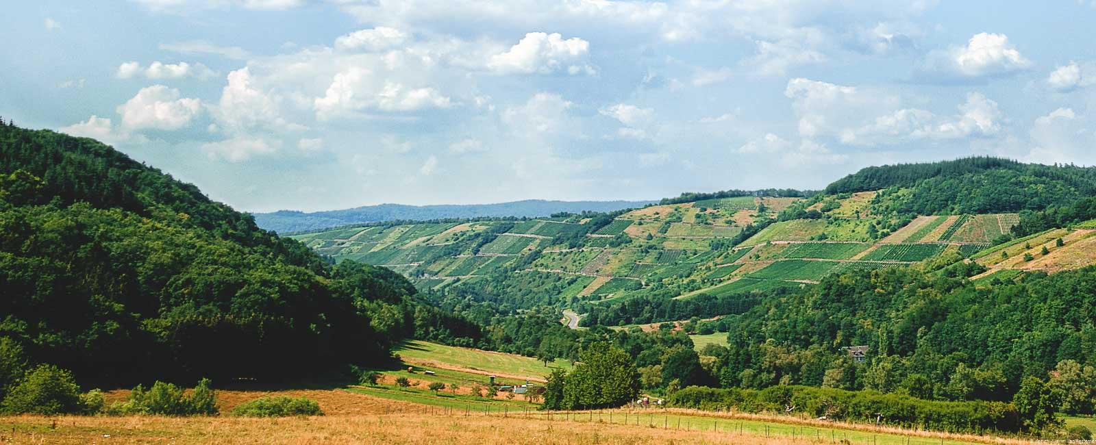 Vorne sind Wiesen im Sommer. Links ist ein bewaldeter Hügel. Vorne ist ein Tal in der Mitte. Auf der rechten Seite vorne ergebt sich der steile Weinberg Dhroner Roterd. Am Himmel sind blaue und weiße Wolken.