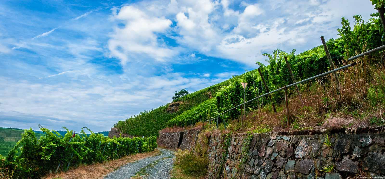 Ein Weg führt durch den steilen Weinberg