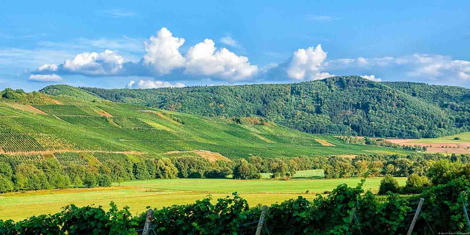 Der Burgener Hasenläufer ist der Weinberg in der Mitte des Bildes. Am blauen Himmel bewegen sich Wolken. Im Hintergrund sind Hügel mit Wäldern.