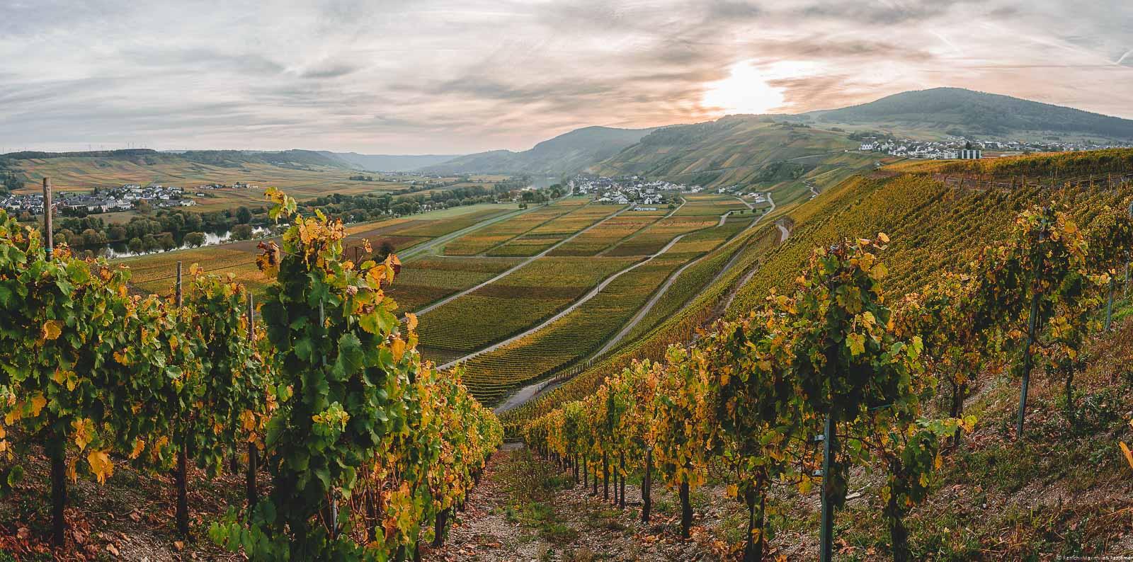 Sonnenuntergang bei Dusemond, Kesten und Osann im Herbst. Vorne erblickt man den Weinberg Kestener Herrenberg. Links verläuft der Lauf der Mosel.