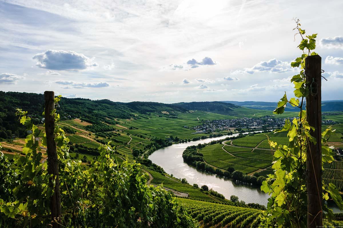 Man blickt vom Weinberg Trittenheimer Apotheke auf eine Biegung des Flusses Mosel im Tal. Im Hintergrund erkennt man den Ort Leiwen, den dazu gehörigen Weinberg Leiwener Klostergarten, bewaldete Hügel und einen leicht bewölkten Himmel oben.
