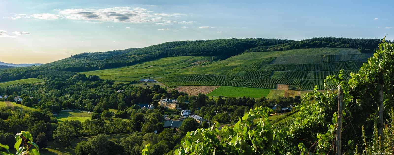 Im Tal liegt der Ort Maring Noviand. Der Weinberg Maring-Noviander Honigberg liegt neben dem Wald und blauem Himmel mit Wolke oben.