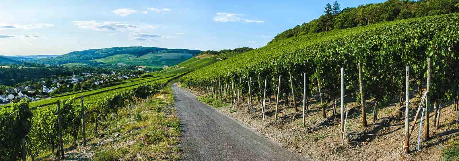 Weg in Weinberg Maringer Sonnenuhr und Dorf Maring-Noviand im Hintergrund