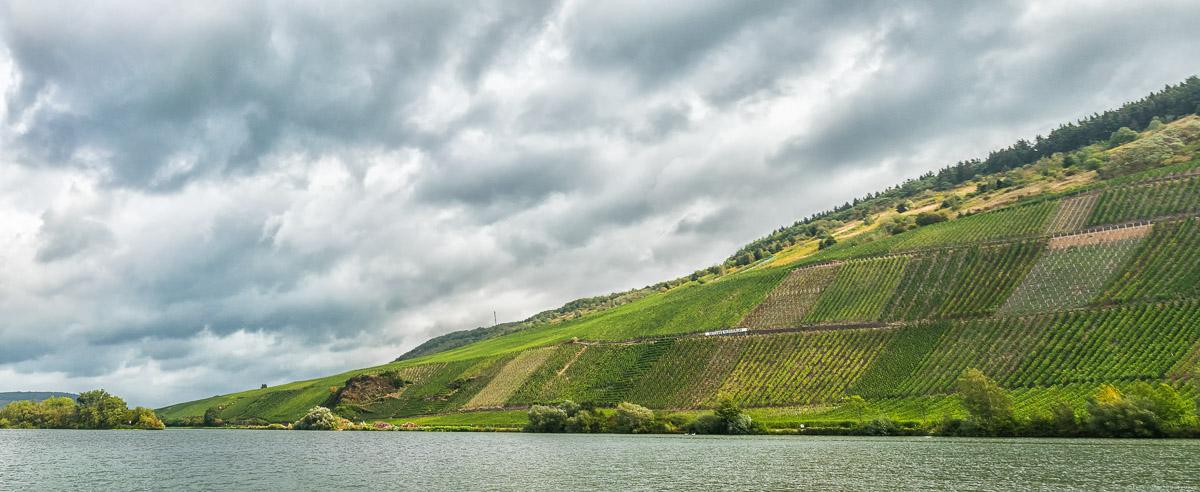 Man erblickt den Fluss im Vordergrund und den Weinberg Detzemer Maximiner Klosterlay am Ufer dahinter bei Regenwetter