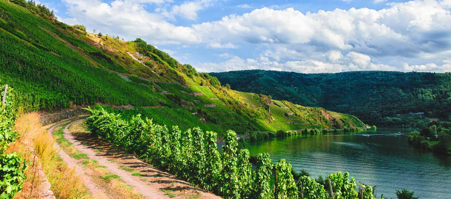 Links am Bildrand führt ein Weg in den Weinberg Mehringer Blattenberg. Am rechten Bildrand sind man den Fluss Mosel. Am blauen Himmel sind einige Wolken.