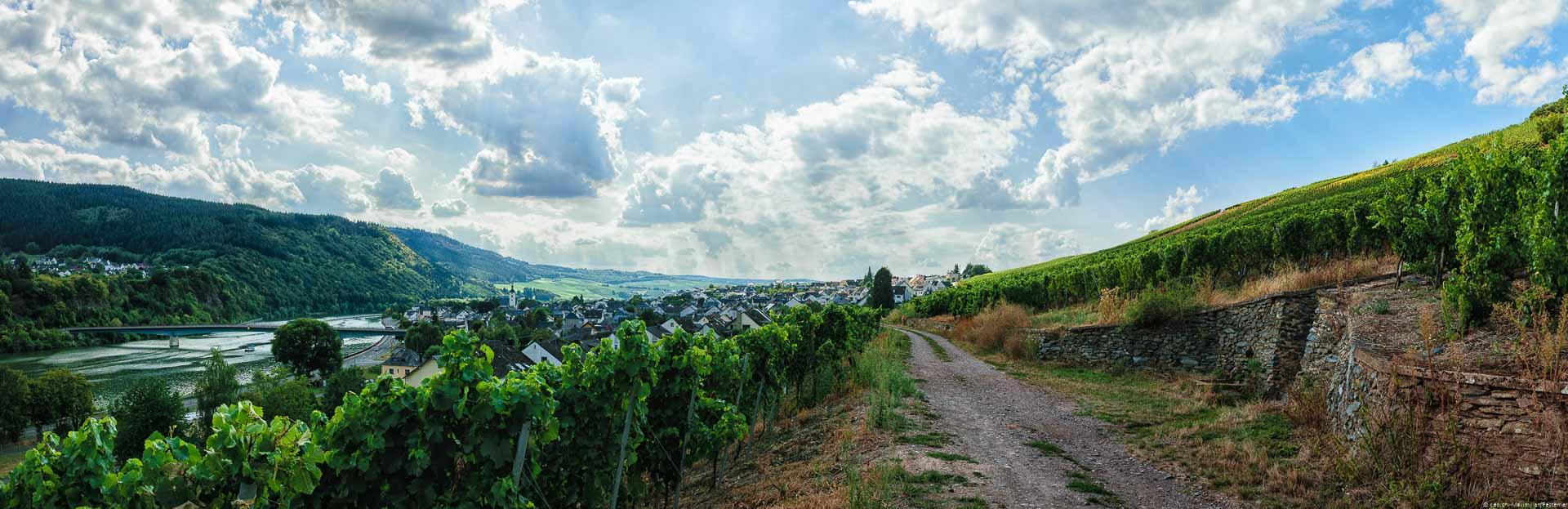 Man blickt auf einen Weg im steilen Weinberg Mehringer Blattenberg. Dahinter erkennt man das Dorf Mehring am linken Ufer des Flusses Mosel. Der blauen Himmel ist leicht bewölkt.