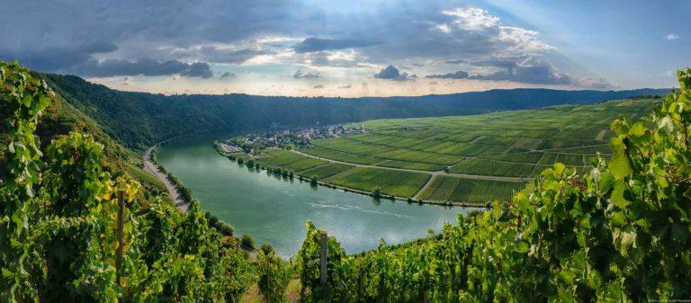 Der Wintricher Ohligsberg bietet einen wunderbaren Blick auf die Mosel. Am gegenüberliegenden Ufer befinden sich der Weinberg Minheimer Rosenberg und das Dorf Minheim. Im Hintergrund erkennt man Regenwolken über bewaldeten Hügeln.