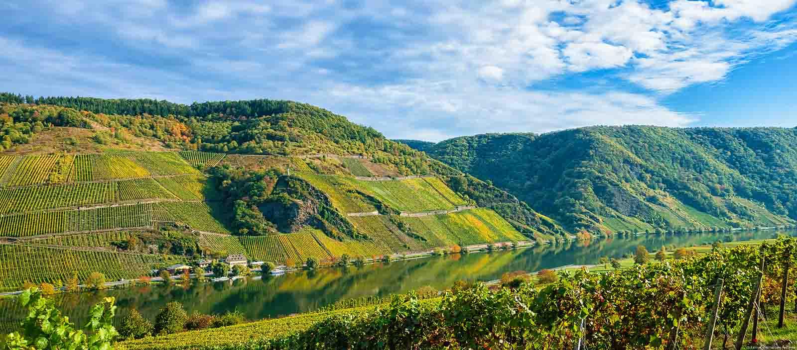 Im Moseltal fließt der Fluss. Überall sind die bunten herbstlichen Weinberge des Wintricher Ohligsberg erkennbar.
