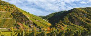 Die Weinberge des Wintricher Ohligsberg färben sich im Bild bunt im Herbst. Vorne fließt der Fluss Mosel. Am blauen Himmel sind Wolken.
