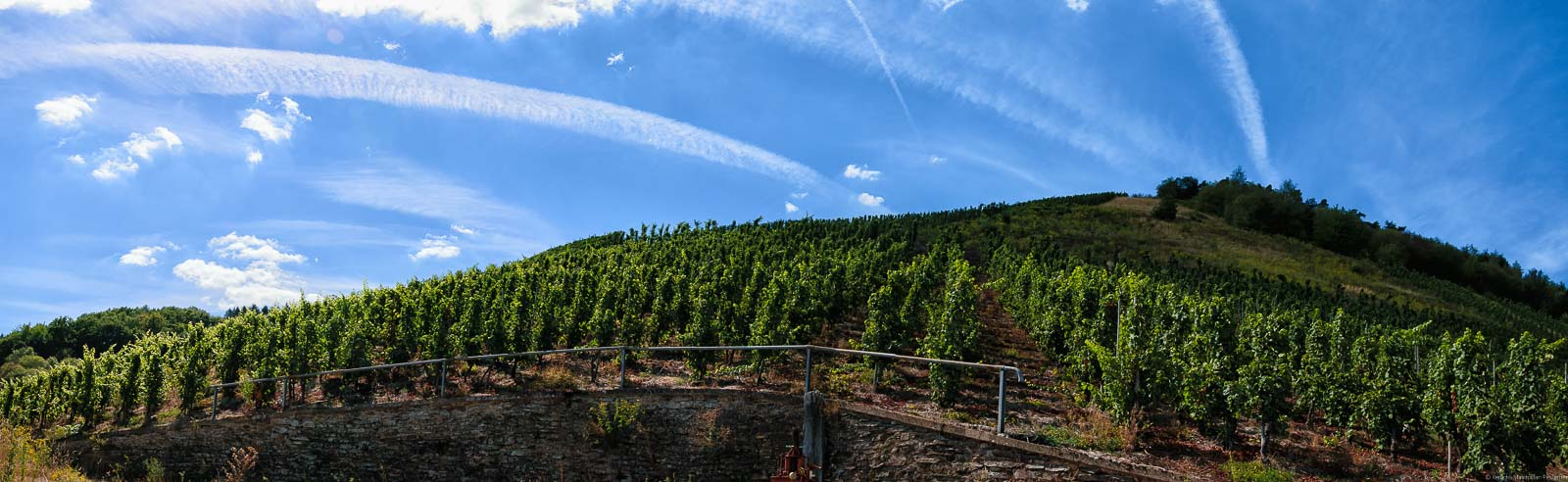 Vor ist ein Weg mit einer hohen Mauer dahinter. Auf der Mauer ist der Weinberg Schleicher Sonnenberg. Oben am blauen Himmel befinden sich Wolken.