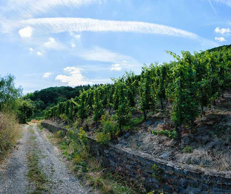 Links verläuft ein steiniger Weg. Rechts befindet sich auf eine Mauer der Weinberg Schleicher Sonnenberg. Im Hintergrund erkennt man links etwas Wald und am Himmel sind Wolken