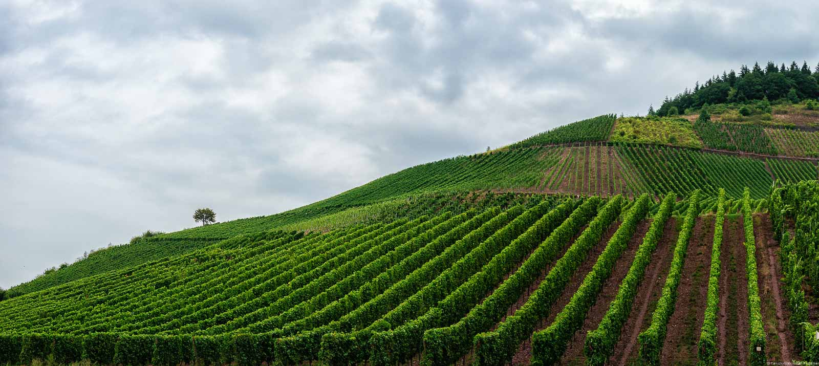 Der Schweicher Annaberg ist bekannt für seinen einzigartigen roten Schiefer. Vorne ist der steile Weinberg. Oben sind Wolken am Himmel.