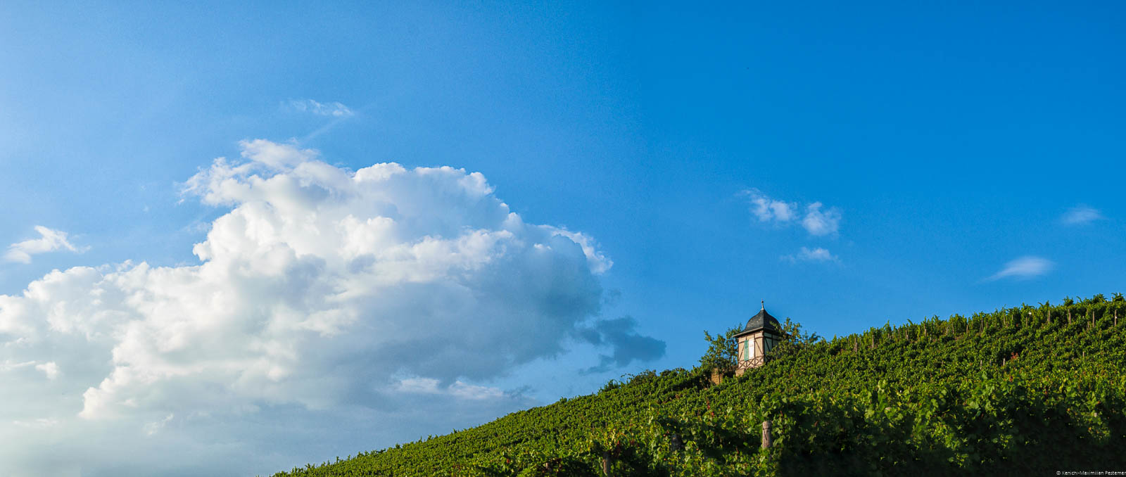 Im Weinberg Veldenzer Carlsberg befindet sich ein kleines Häuschen. Am blauen Himmel befindet sich eine große Wolke.