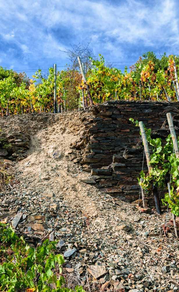 eingebrochene Trockenmauer im Weinberg Walporzheimer Domlay; Rebstöcke oben und unten