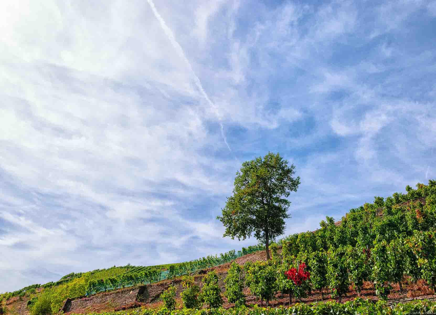 Von diesem Weinberg im Ahrtal stammen die Rotwein-Trauben für Spätburgunder