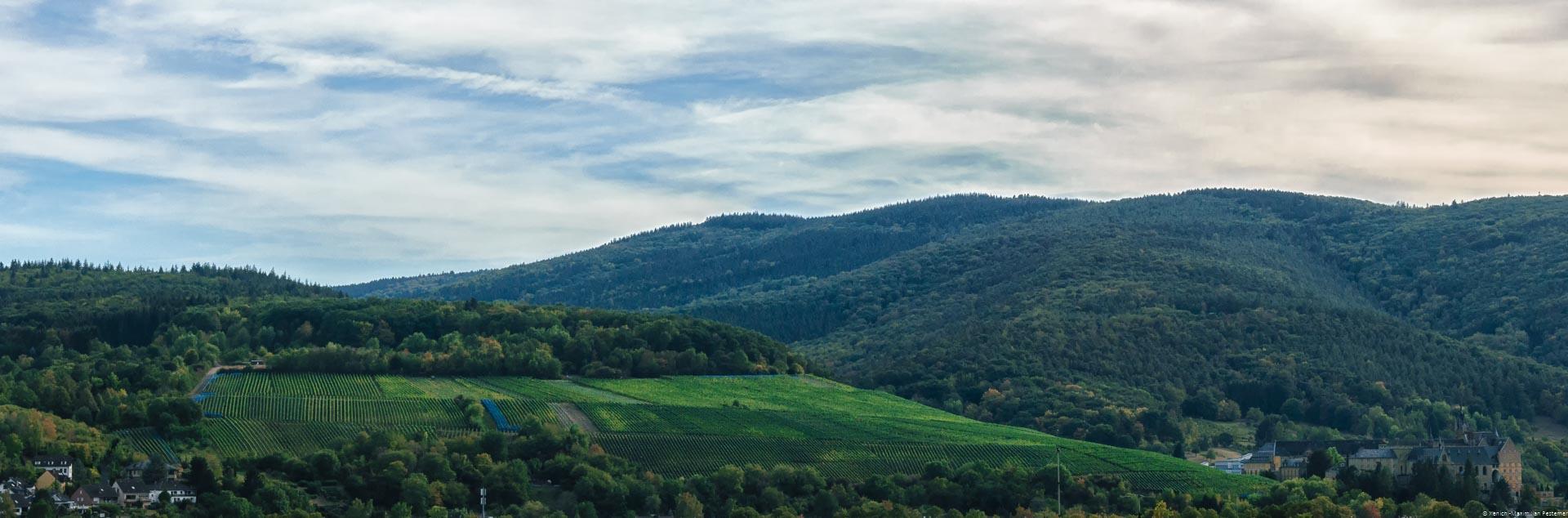 Weinberg inmitten von bewaldeten Hügel mit einigen Häusern am Rand und bewölktem Himmel
