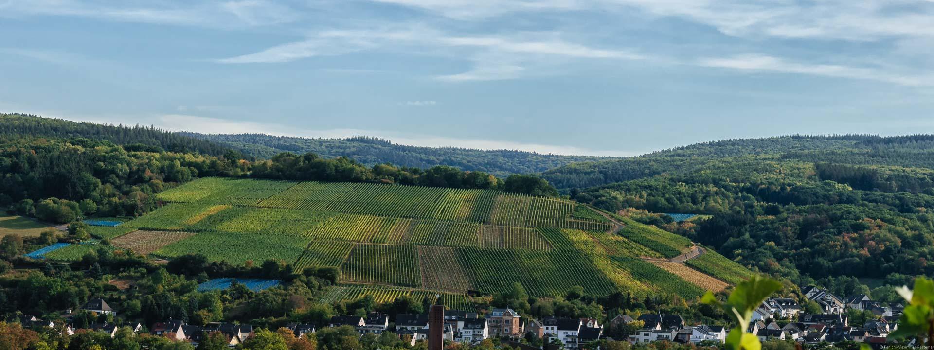 Mit den Trauben des Karlskopfes werden Rotweine hergestellt