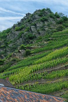 Der Mayschosser Laacherberg ist ein Weinberg nahe am Fluss, an dem vor allem Spätburgunder angebaut wird