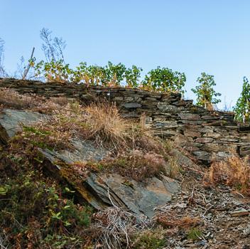 Trockenmauer aus Schiefer und Grauwacke am Recher Herrenberg