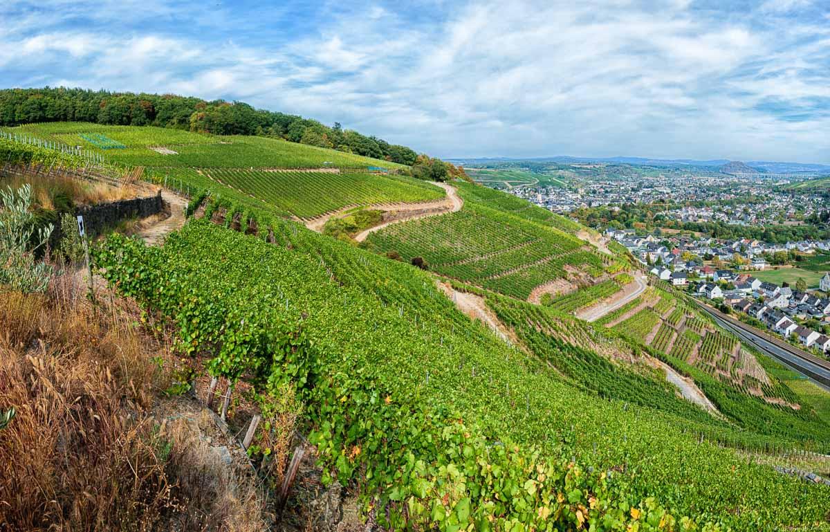 """Die """"Alte Lay"""" ist ein Weinberg mit Südausrichtung am Rotweinwanderweg"""