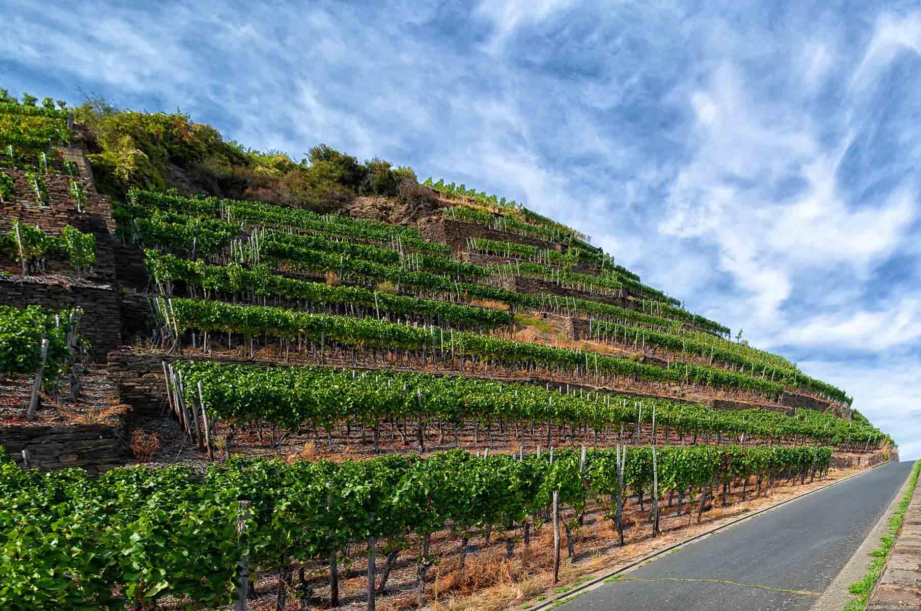 Der Weinberg Walporzheimer Kräuterberg in der Region Ahr wird auf Terrassen bewirtschaftet. Vorner verläuft eine Straße. Oben ist leicht bewölkter Himmel