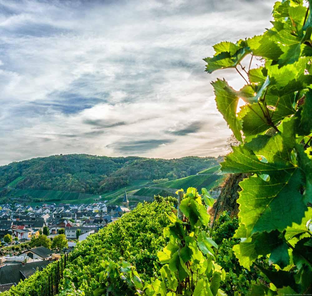 Der Ahrtaler Ort Dernau liegt mitten in einem Amphitheater von Weinbergen eingekreist. Bei dem Weinberg handelt es sich um den Dernauer Pfarrwingert.