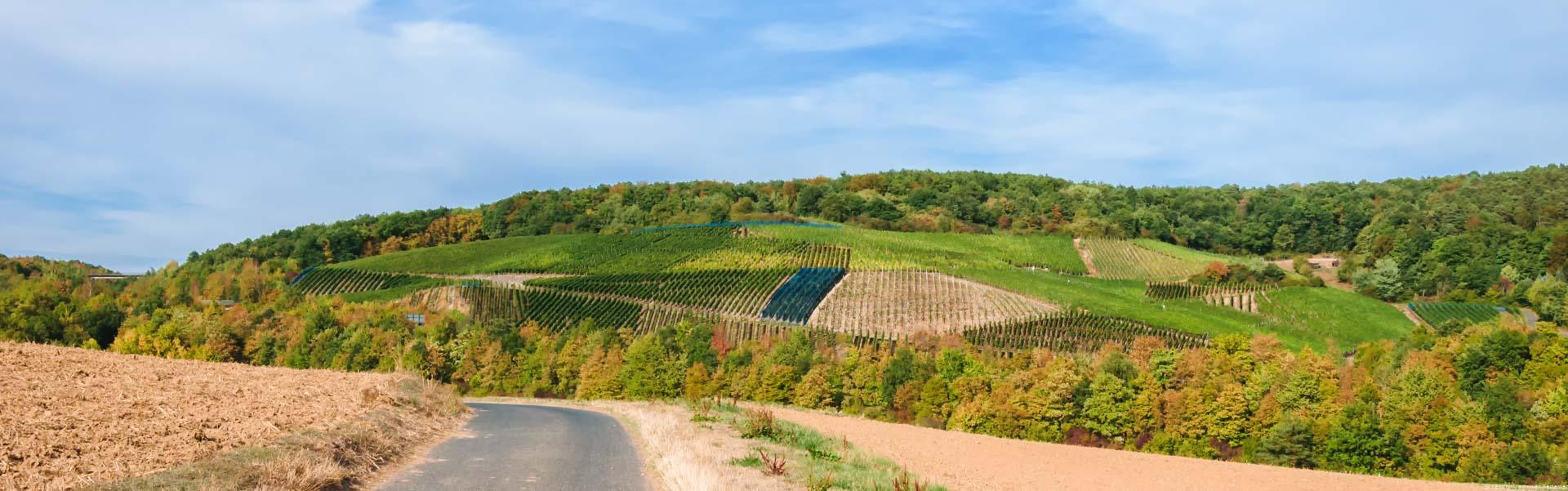 Dieser Weinberg bei Bad Neuenahr liegt am Rande des Weinanbaugebietes