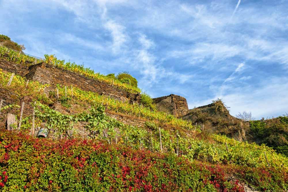 Hier sieht man wie die einzelnen Ebenen des Weinbergs Marienthaler Jesuitengarten durch Trockenmauern getrennt sind