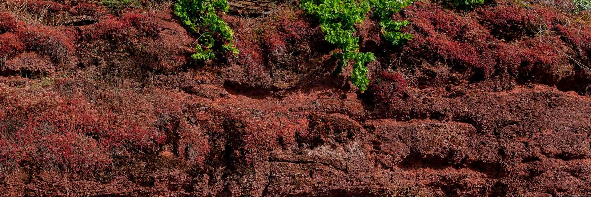 Das Gestein des Ürziger Würzgarten besteht aus sogenanntem Rotliegendem