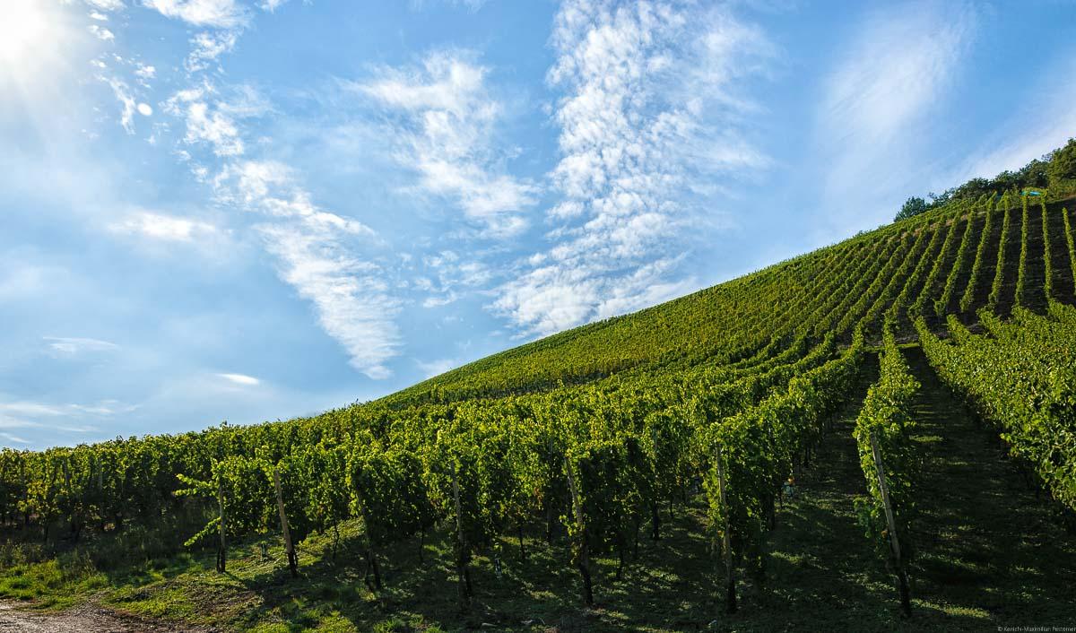 Steiler Weinberg Ayler Kupp; Wolken am blauen Himmel