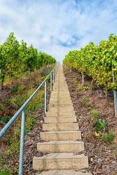Schmale Treppe mit Geländer auf der linken Seite führt den steilen Weinberg von unten nach oben hinauf; Frontalansicht; Wolken am Himmel