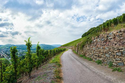Weg im Weinberg Ayler Kupp; Reben und Ort Ayl auf der linken Seite; Trockenmauer aus Schiefer auf der rechten Seite; Wolken am Himmel