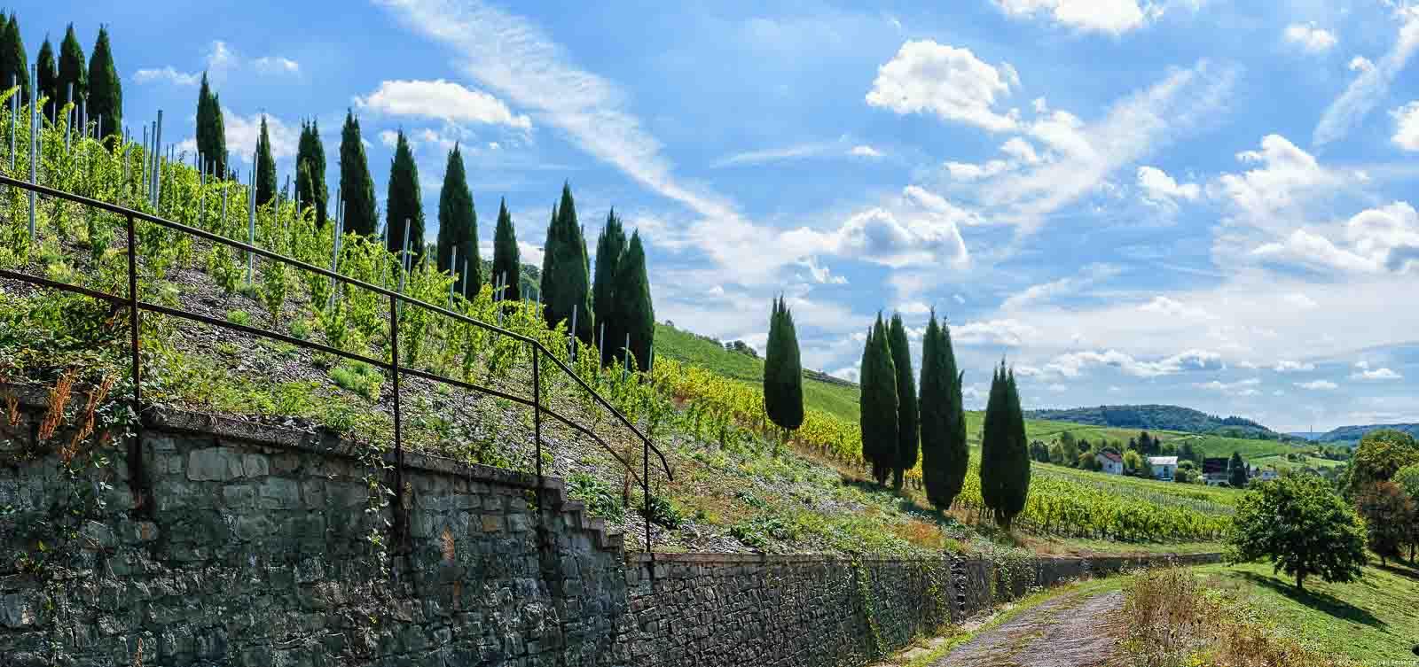 Weg und Bäume zur Rechten; Mauer aus Gestein aus Schiefer zur Linken. Steiler Weinberg Filzener Pulchen mit Bäumen am Hang auf der linken Seite; Wolken am blauen Himmel