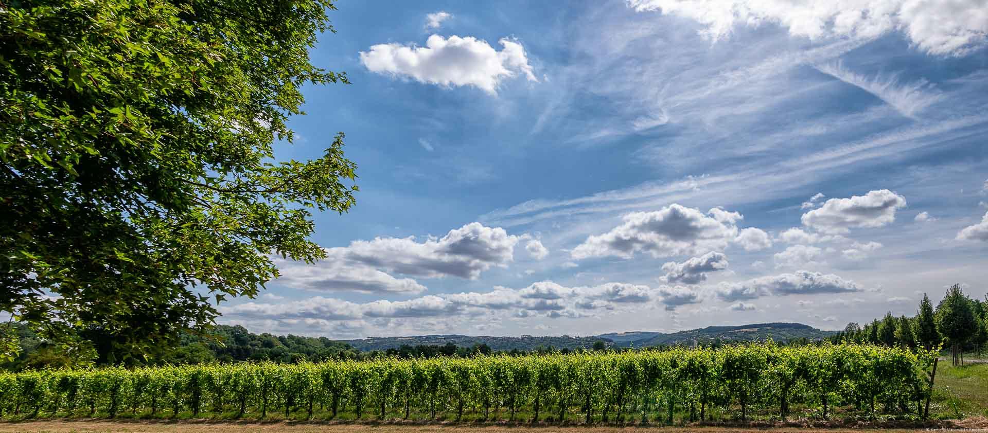 Weinberg und Himmel mit Wolken an Obermosel