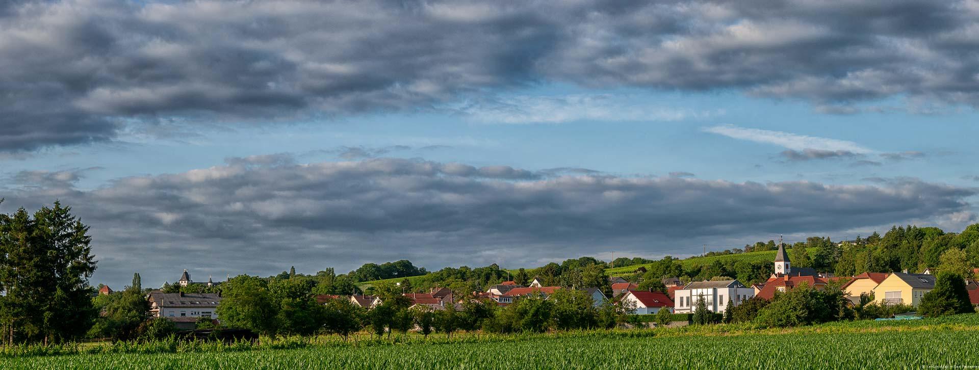 Der Nenniger Römerberg stellt einen der Ursprünge der Weine des Saarlands dar