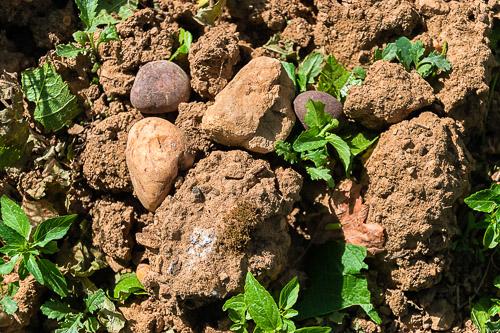 Muschelkalk und Gesteine im Weinberg