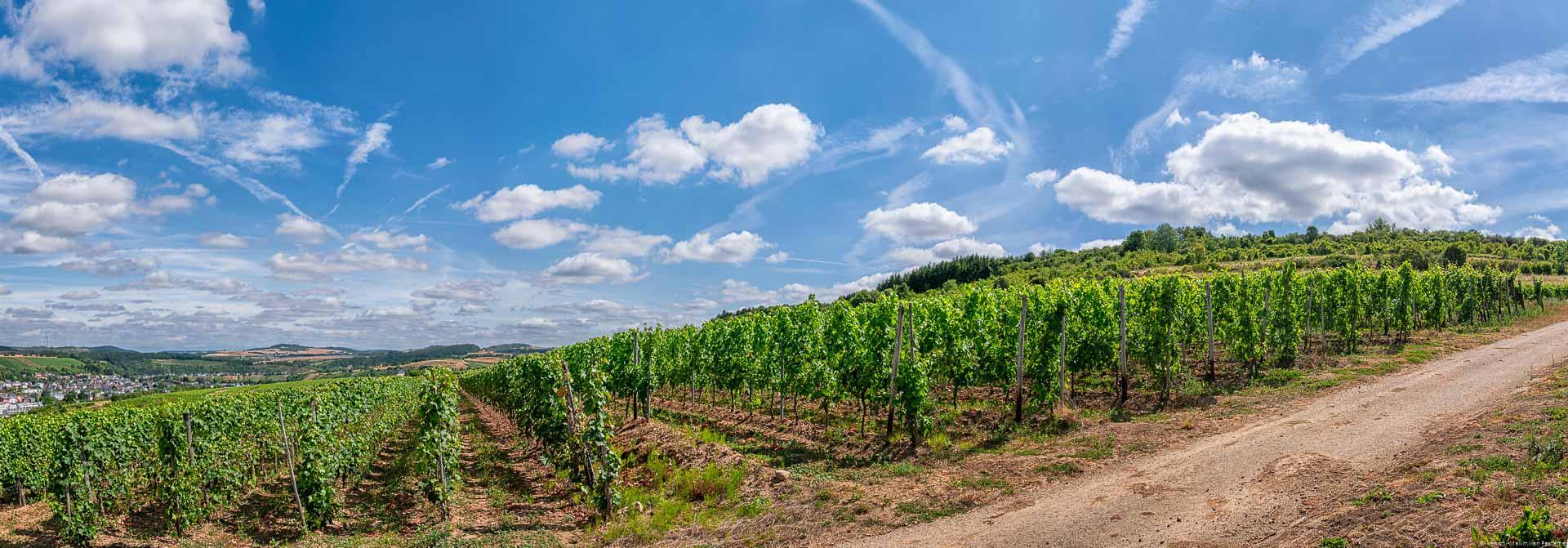 Weinberg und blauer Himmel mit einigen Wolken