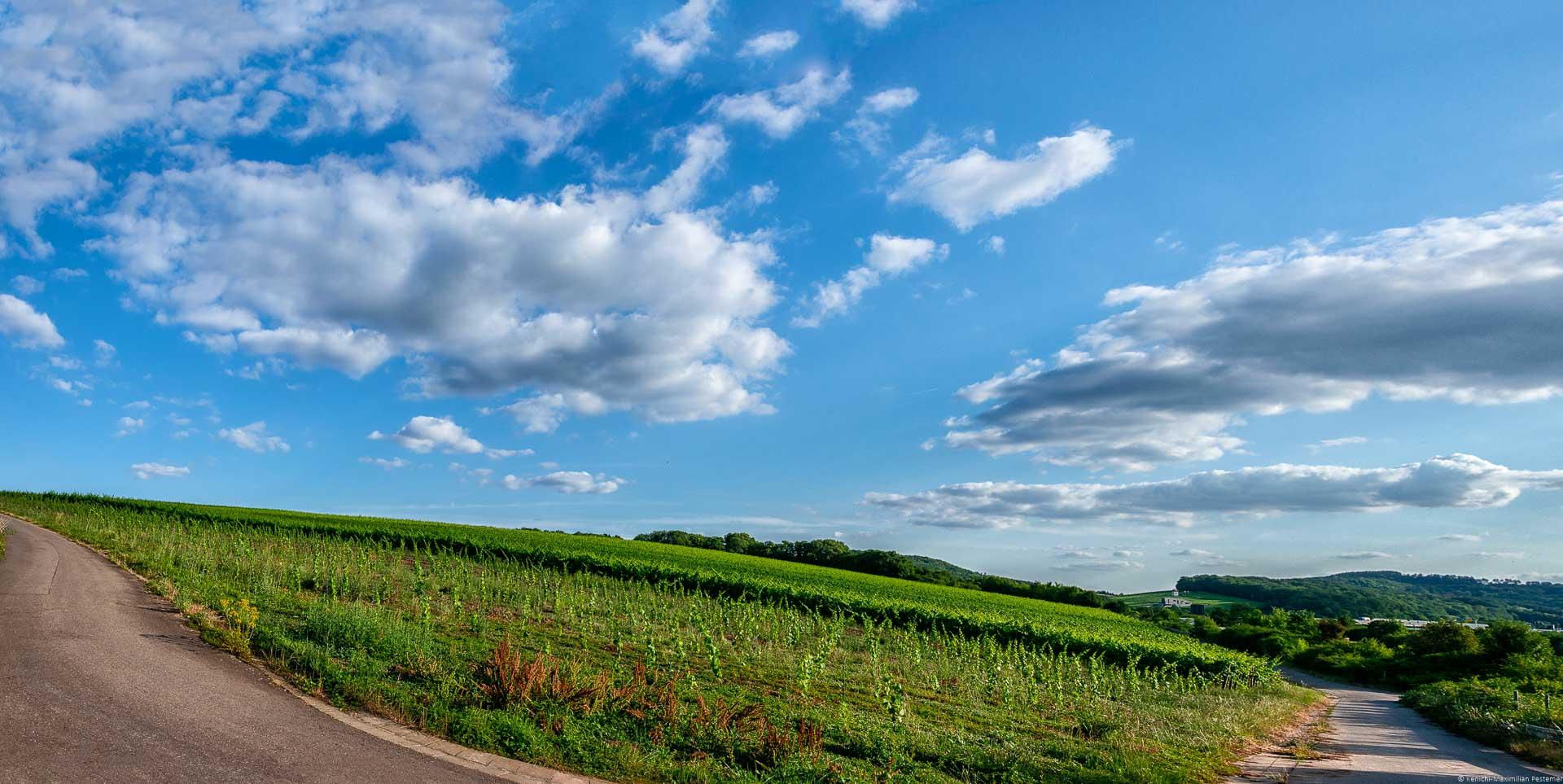 Wege befinden sich um Weinberg Sehndorfer Klosterberg herum und am blauen Himmel sind Wolken. Am anderen Ufer befindet sich das Land Luxemburg