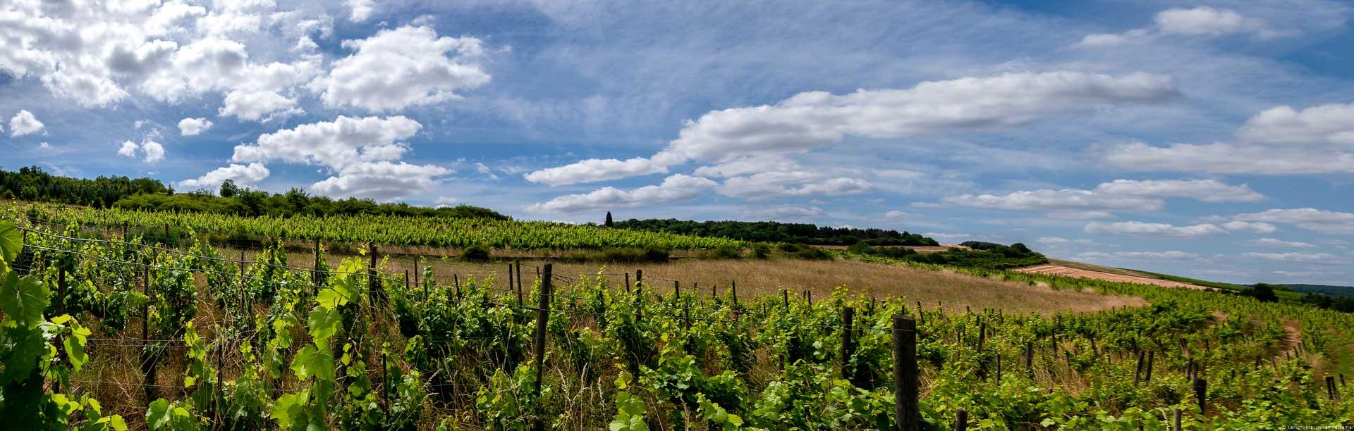 Vorne erkennt man die Reben des Weingartens Temmels St. Georgshof. In der Mitte des Bildes erkennt man Wiese und einige Bäume. Am blauen Himmel sind einige Wolken.