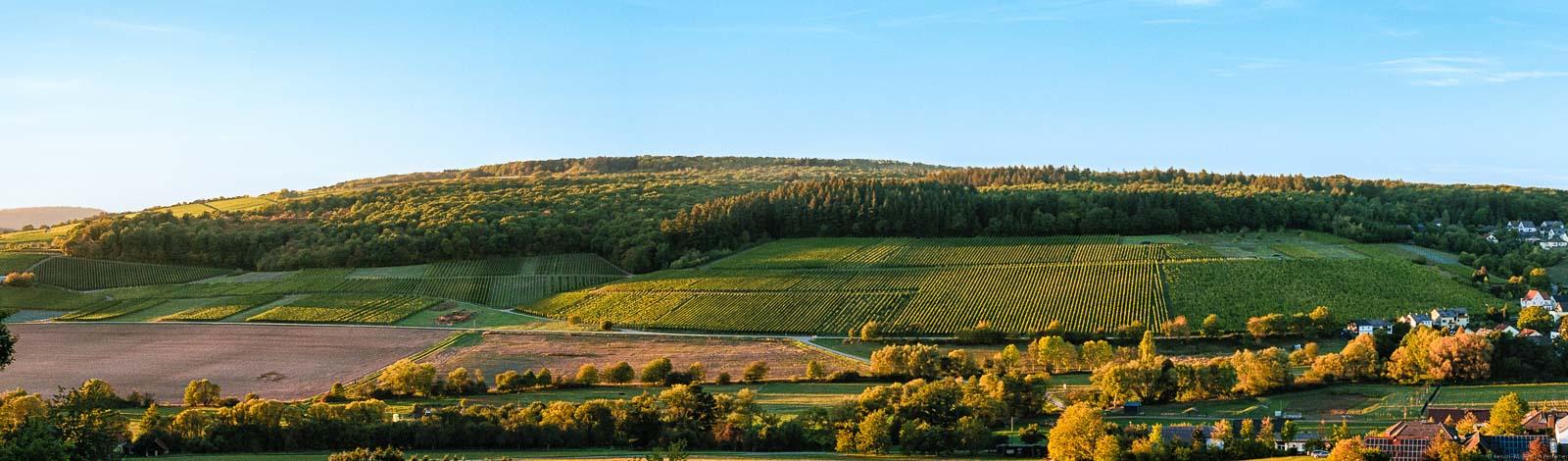 Vorne sind Wiesen und Bäume. Dahinter ist der Weinberg Oberemmeler Rosenberg und damit auch den Wiltinger Rosenberg. Oben sieht man den blauen Himmel.
