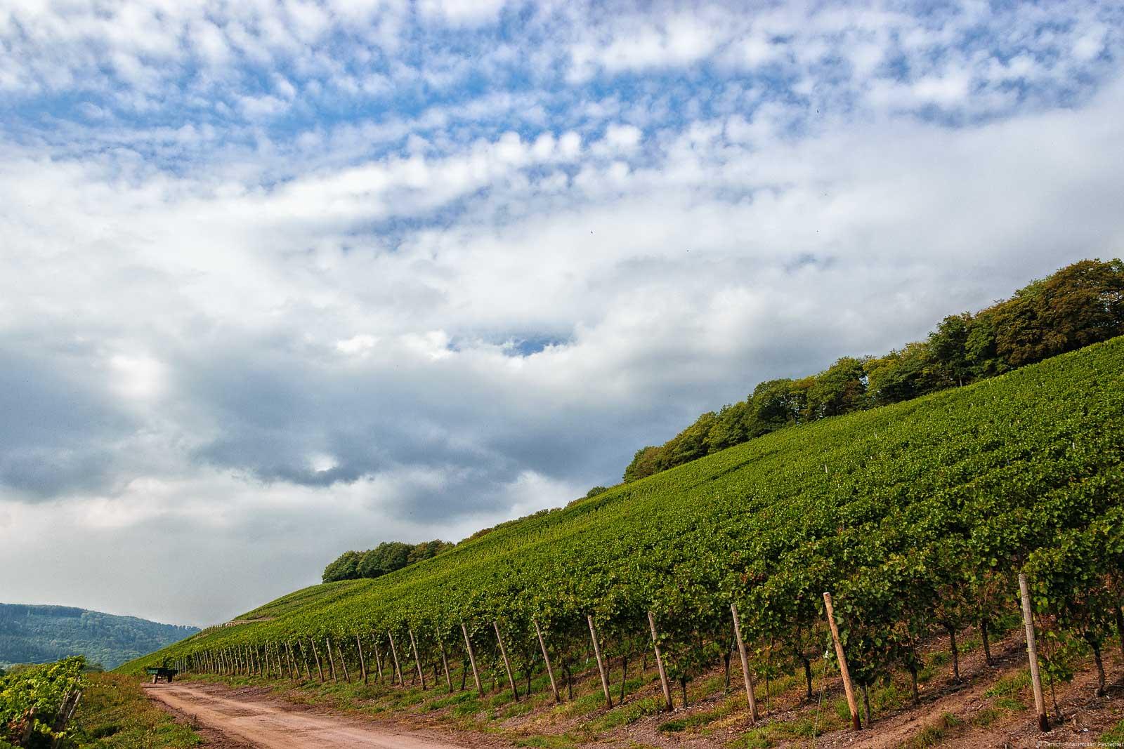 Mitten im Weinberg Ayler Kupp befindet sich ein weitere Weinberg. Es ist der Ayler Herrenberger. Vorne links verläuft ein rötlicher Schotter-Weg. Oben rechts am sind Bäume. Der blaue Himmel ist stark bewölkt.