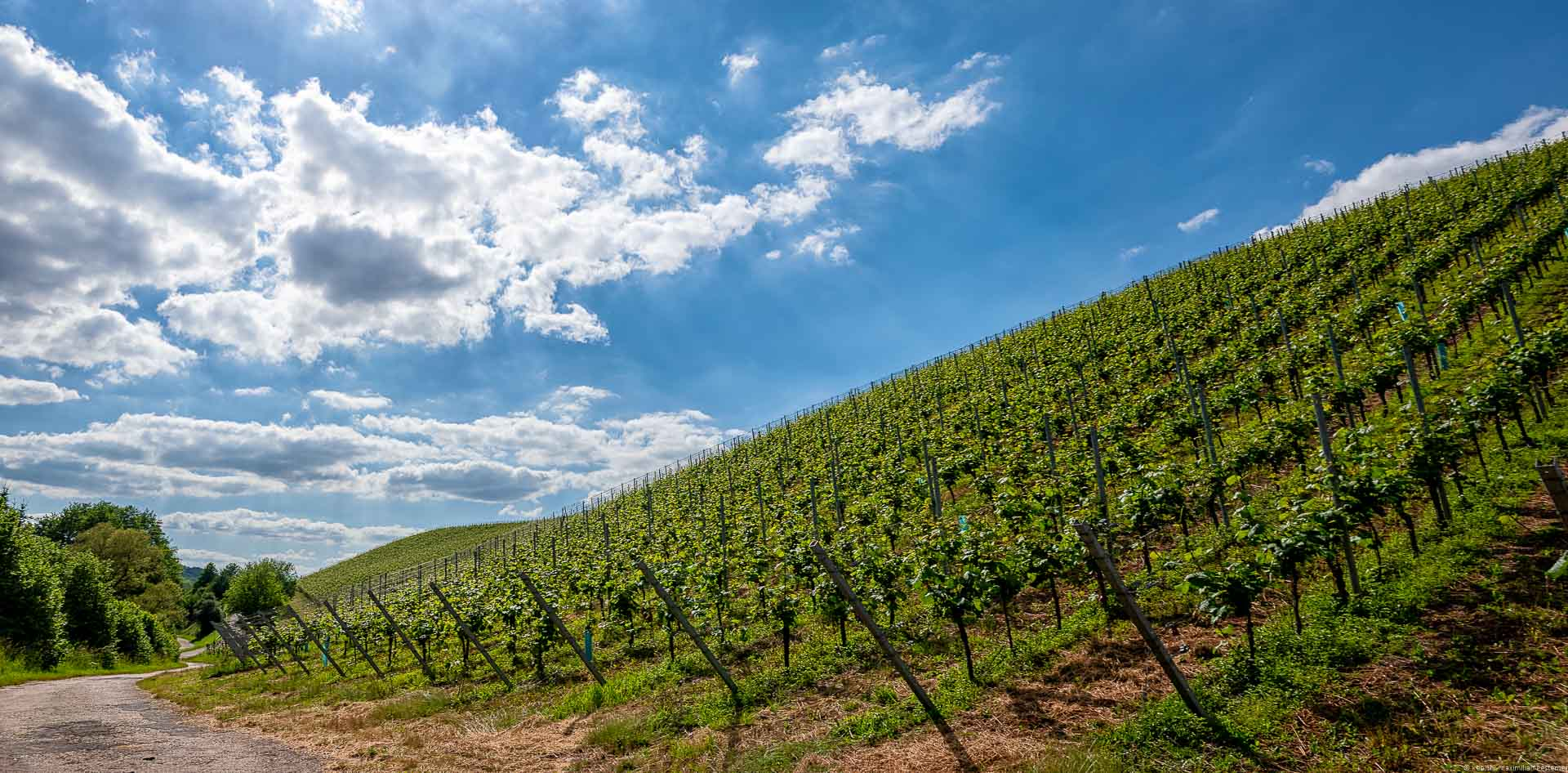 Auf der rechten Seite ist ein steiler Weinberg. Oben sind Wolken.