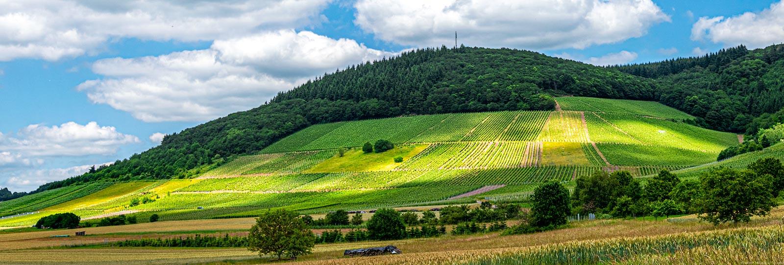 Vorne sind Wiesen. In der Mitte ist der Weinberg Oberemmeler Karlsberg. Oben ist der Himmel.
