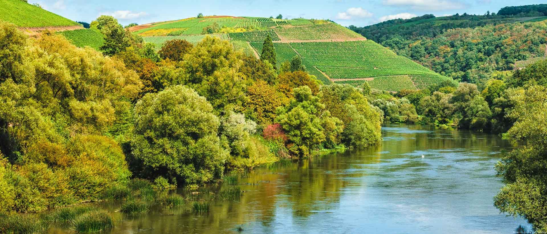 Von der Kanzemer Brücke hat man einen schönen Blick auf die Weinberge. Man erkennt den Steilhang Wiltinger Braune Kupp am Ende des Flusses Saar in der Mitte des Bildes. Am Ufer der Saar befinden sich Bäume.